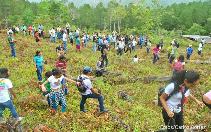 Cruzada Nacional de Reforestación se desarrolla con éxito en todo el país
