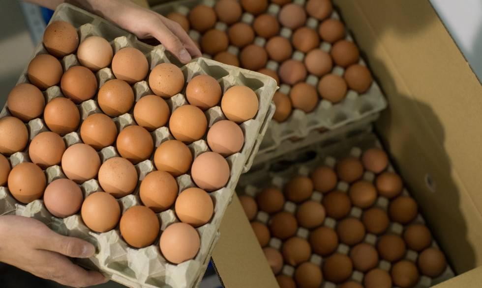 Solicitarán la importación de huevos para bajar el precio