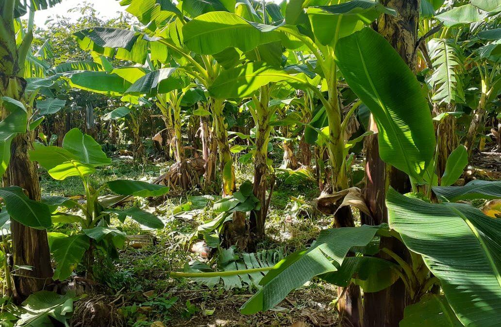 Nicaragua: producción a orillas del lago Xolotlán se desarrolla libre de químicos
