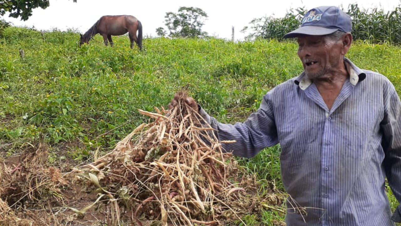 Pequeños productores de frijol y maíz, con buenas expectativas de cosecha - Canal 2
