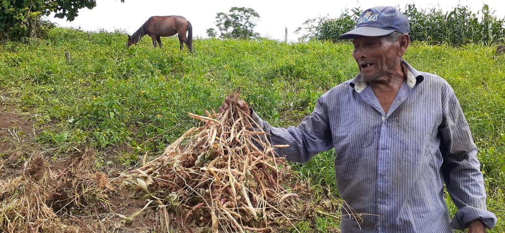 Pequeños productores de frijol y maíz, con buenas expectativas de cosecha