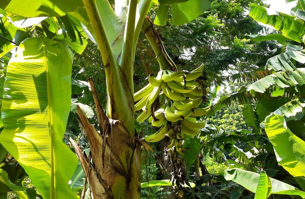 Diversificación de cultivos en comunidad de Ciudad Sandino