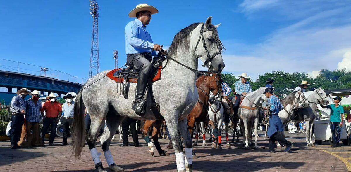 Hípica de Granada con gran participación de montados
