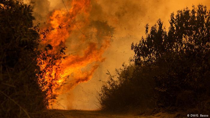 Incendios destruyen casi un cuarto del Pantanal brasileño