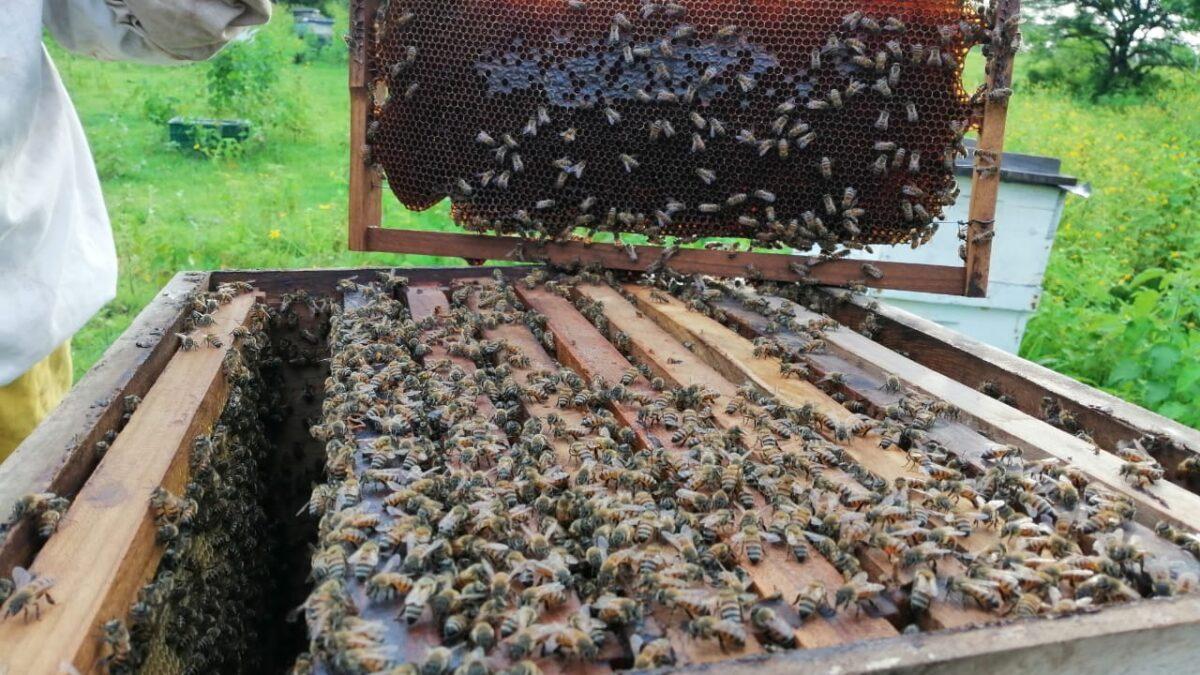 Producción de miel es una realidad para mujeres de San Francisco Libre