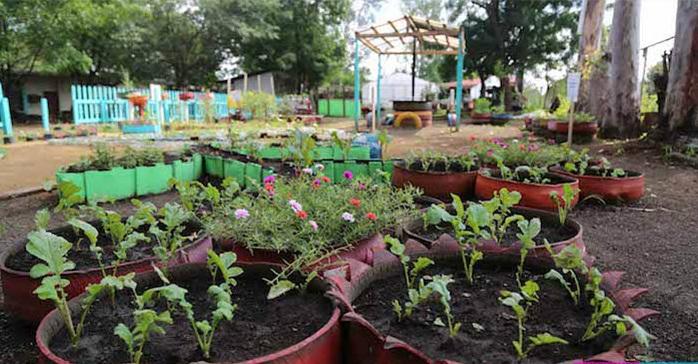 Más de 300 mil familias beneficiadas con el programa patio saludable