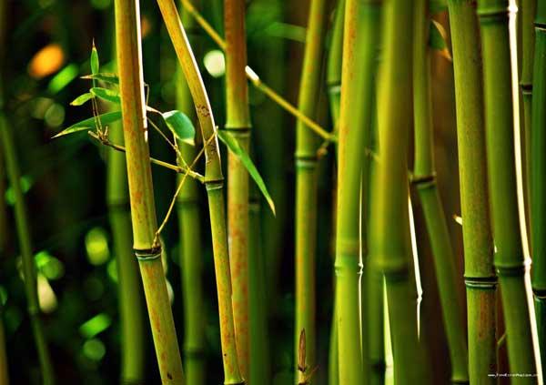 ¡Bambú¡ ¿Lo prefiere con carne molida o pollo en su plato?