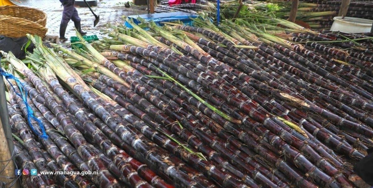En venta la caña de piña en los mercados capitalinos