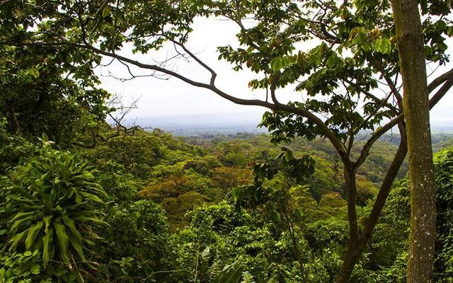 Manual de plagas y enfermedades en viveros y bosques de Nicaragua