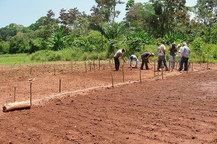 Gobierno garantizará frijoles en siembra de Apante