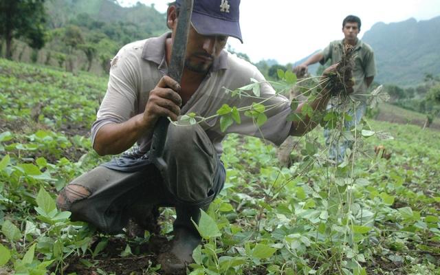Recientes lluvias no afectarán cosecha de postrera en Nicaragua