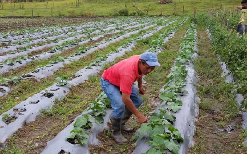 50 mil bonos de seguridad alimentaria se han entregado en el Caribe nicaragüense