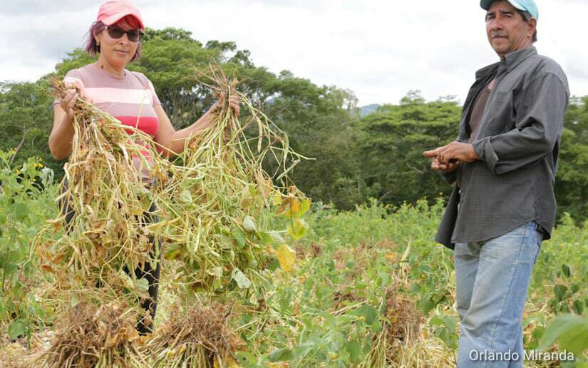 Director regional del PMA descarta crisis alimentaria en Nicaragua