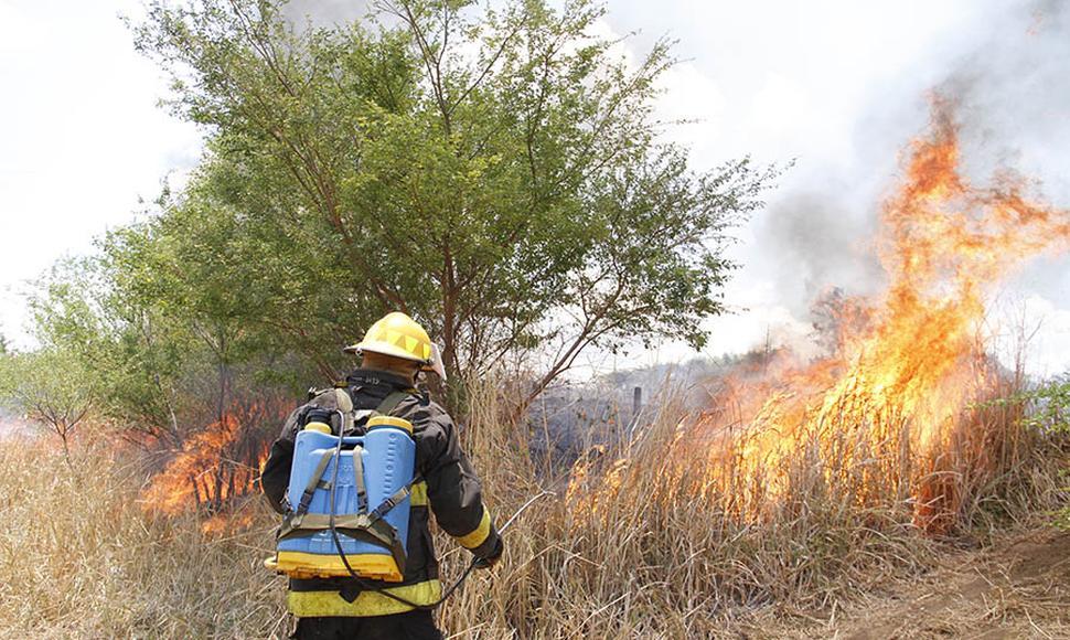 Plan contra incendios forestales mitigará zonas secas y afectadas por huracanes