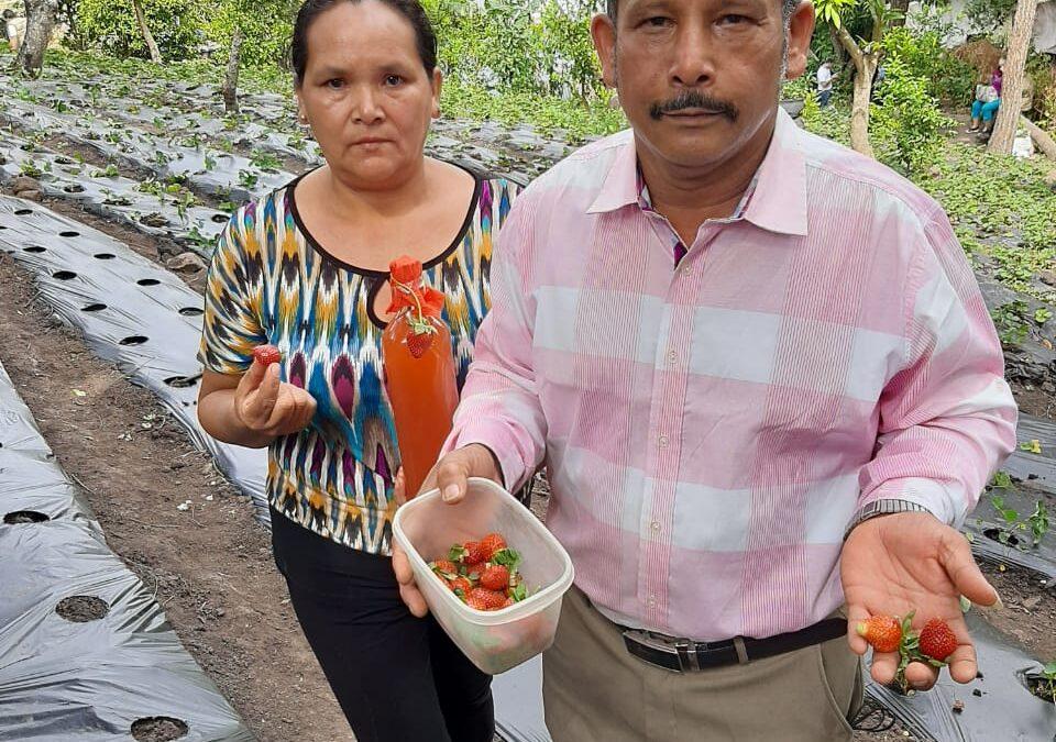 El exitoso cultivo y licores de fresa del matrimonio Castellón-Ramos en Madriz