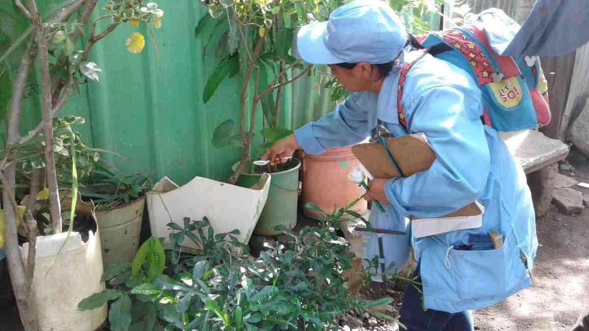 Brigadistas cortan ciclo de reproducción de mosquitos en barrio La Fuente