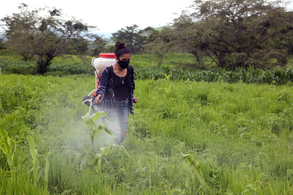 Escuelas técnicas del campo aumentan la producción nacional en Nicaragua