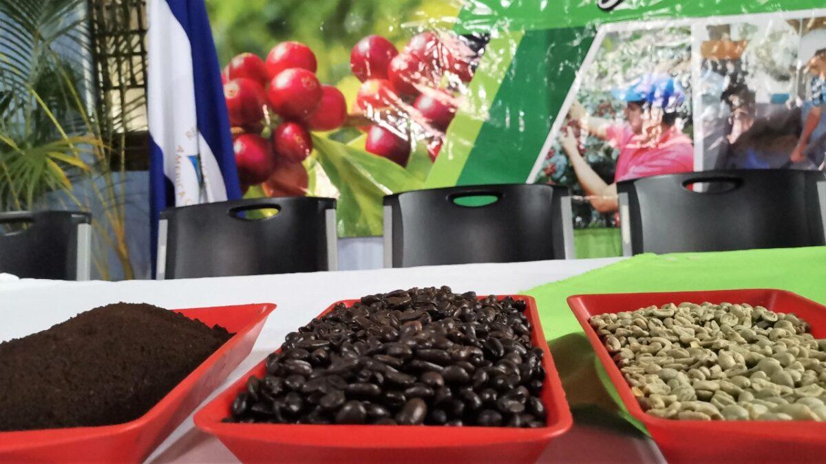 Terreno listo para construir tecnológico de café especial en Dipilto