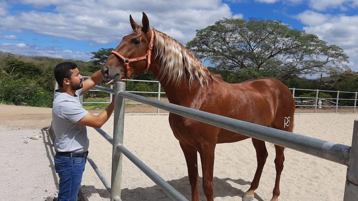 Somoto: Crianza de caballos pura raza española, parador turístico y club ecuestre en desarrollo