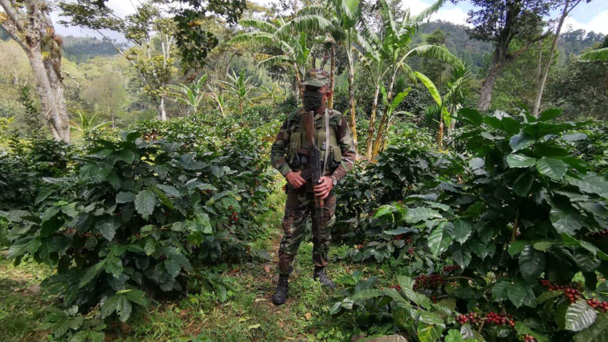 Ejército garantiza seguridad durante la cosecha cafetalera