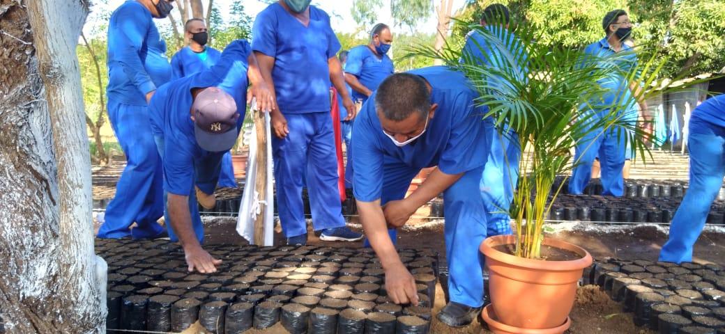 Penitenciarios de Nicaragua producirán 75 mil plantas