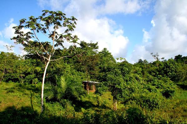 Financiarán a decenas de emprendedores forestales en Nicaragua