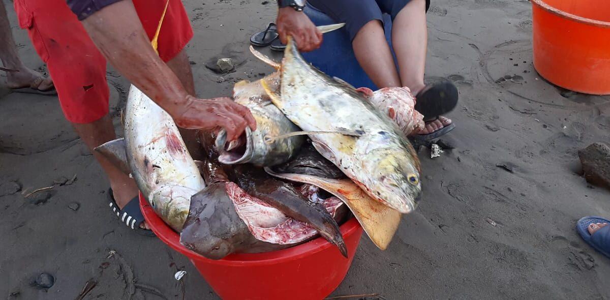 Unas 35 mil libras de mariscos salen semanalmente de Masachapa