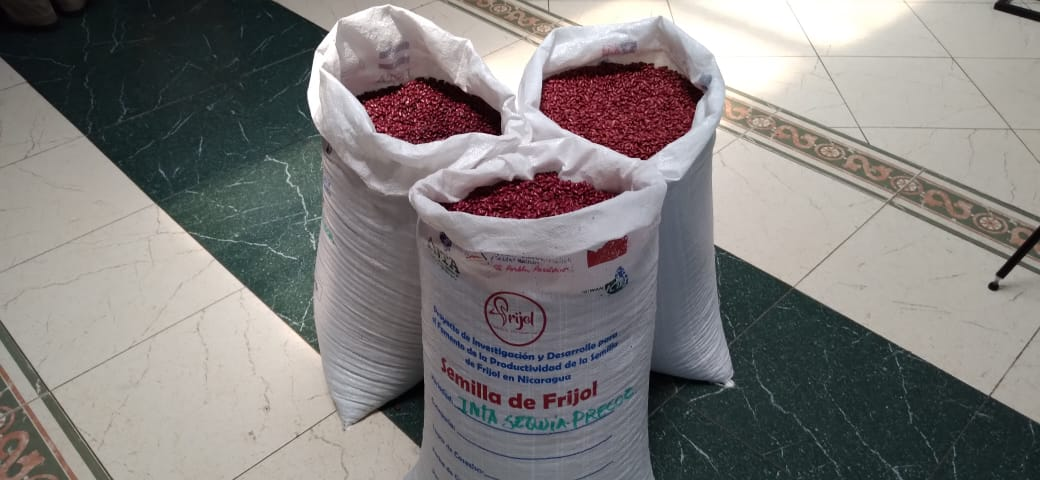 Mejoran rendimientos productivos del frijol rojo en Nicaragua