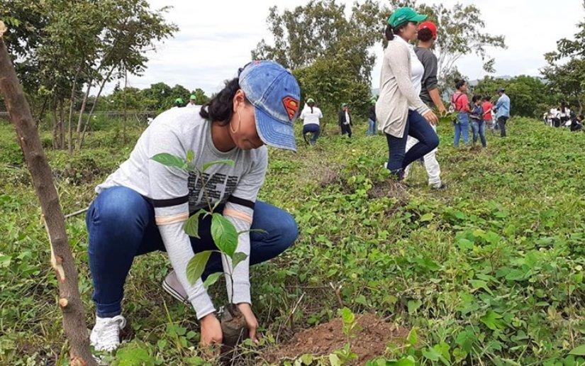 250 mil plantas serán donadas para la Jornada de Reforestación