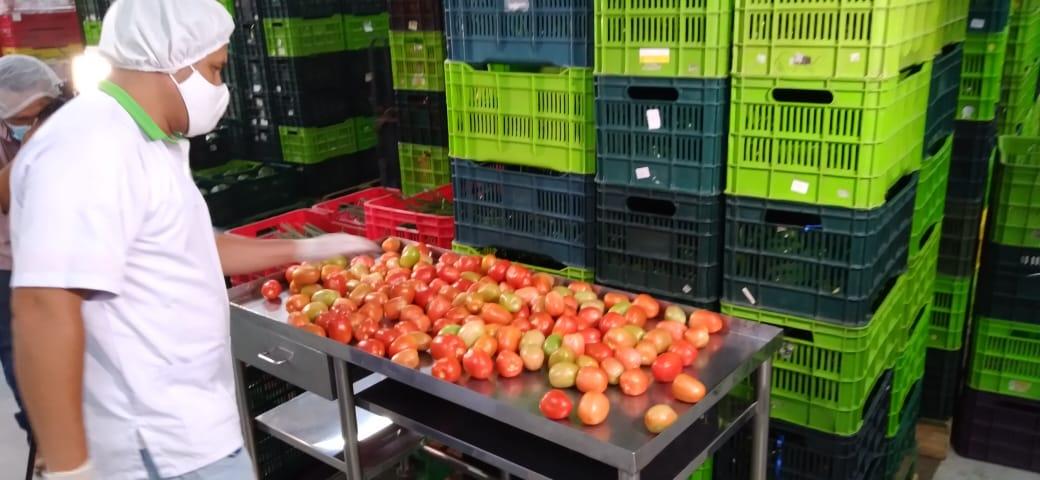Moderno acopio de vegetales en el norte de Nicaragua, genera ventaja competitiva regional