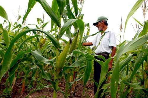 Agricultores nicaragüenses tendrán acceso a más tecnología para aumentar productividad