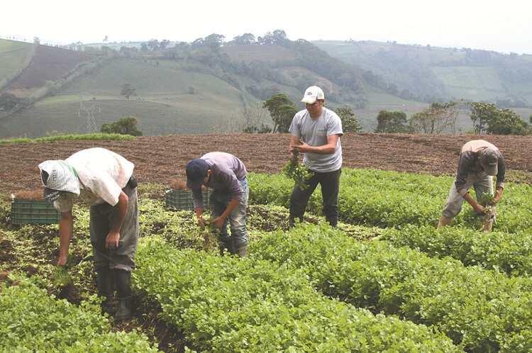 Más de C$400 millones son dirigidos a incentivar la producción en Nicaragua