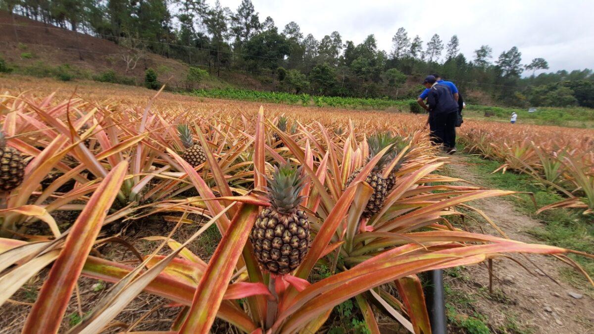 Diversifican en Ciudad Antigua la producción para salir de lo poco rentable