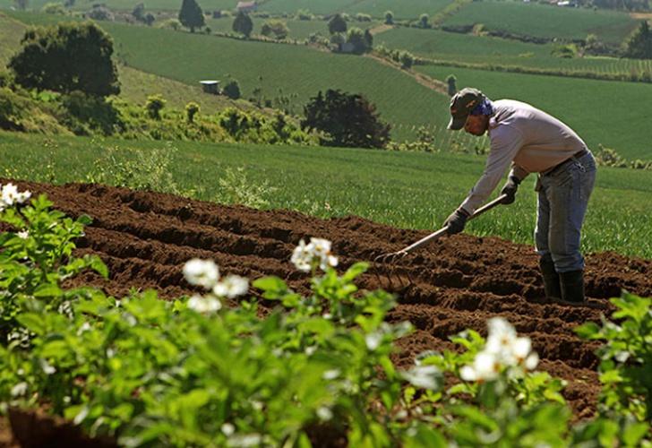 Producción agropecuaria de Nicaragua ha crecido un 76%