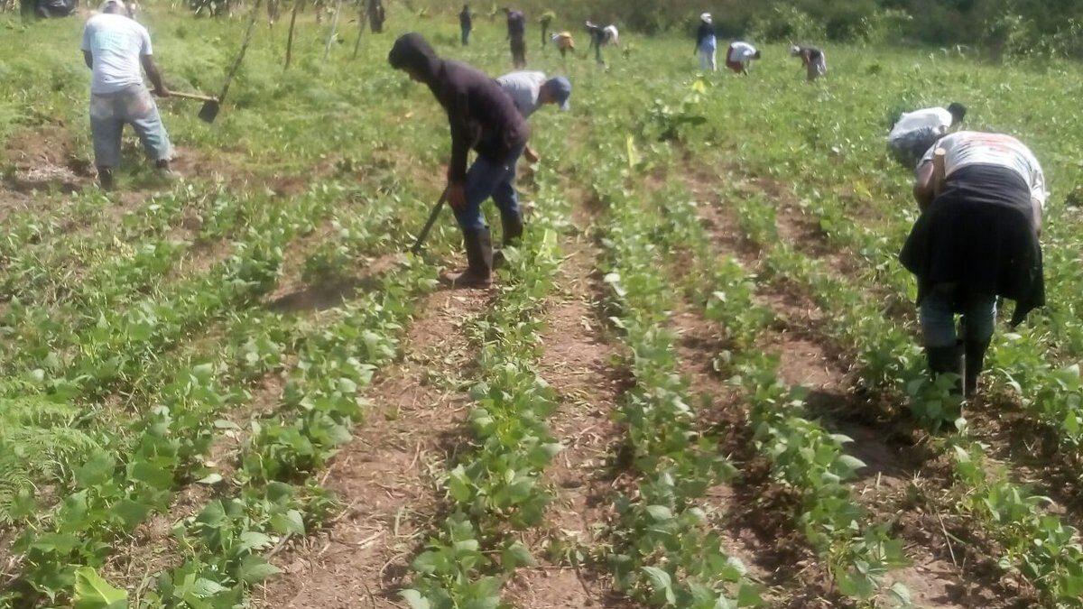 Productores preparados para la siembra de primera con apoyo del INTA