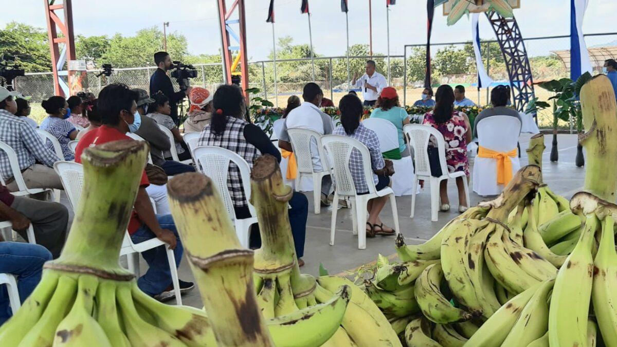 Actividad agropecuaria genera más del 30% de empleos en Nicaragua