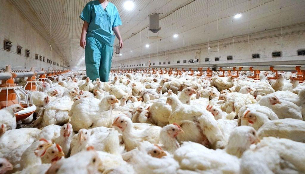 Primer caso de gripe aviar H10N3 en humano se registra en China