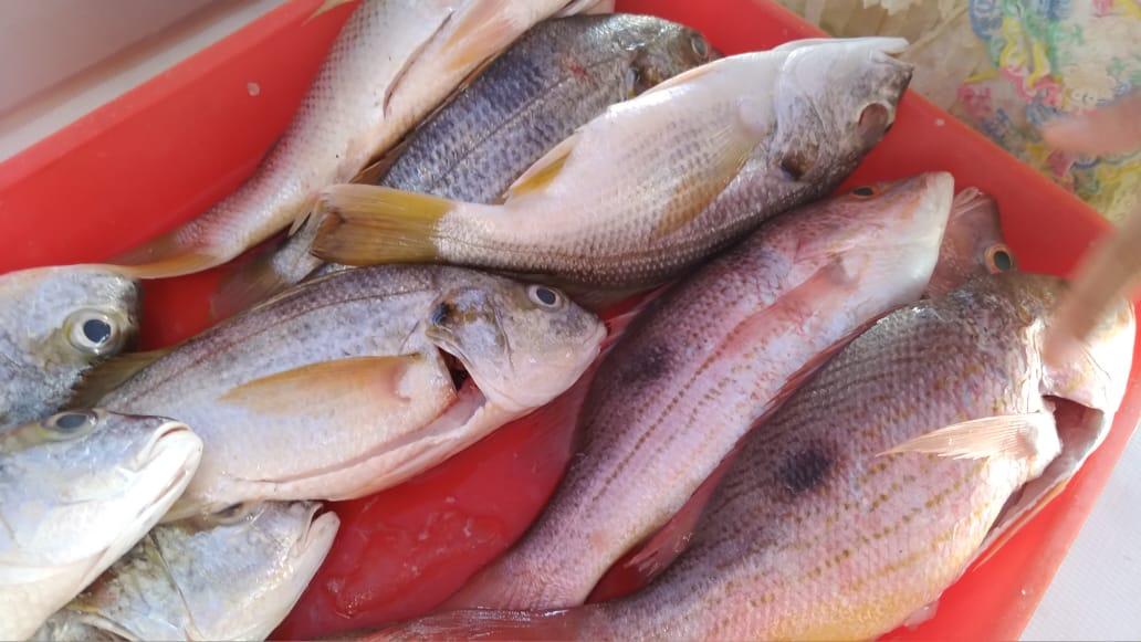 Productos del mar a precios cómodos, en las ferias de la plaza 22 de Agosto