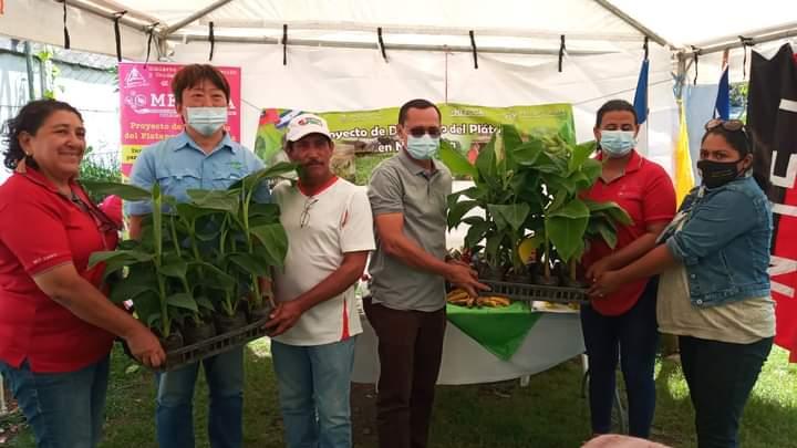 Carazo: productores son capacitados para el cultivo de plátanos
