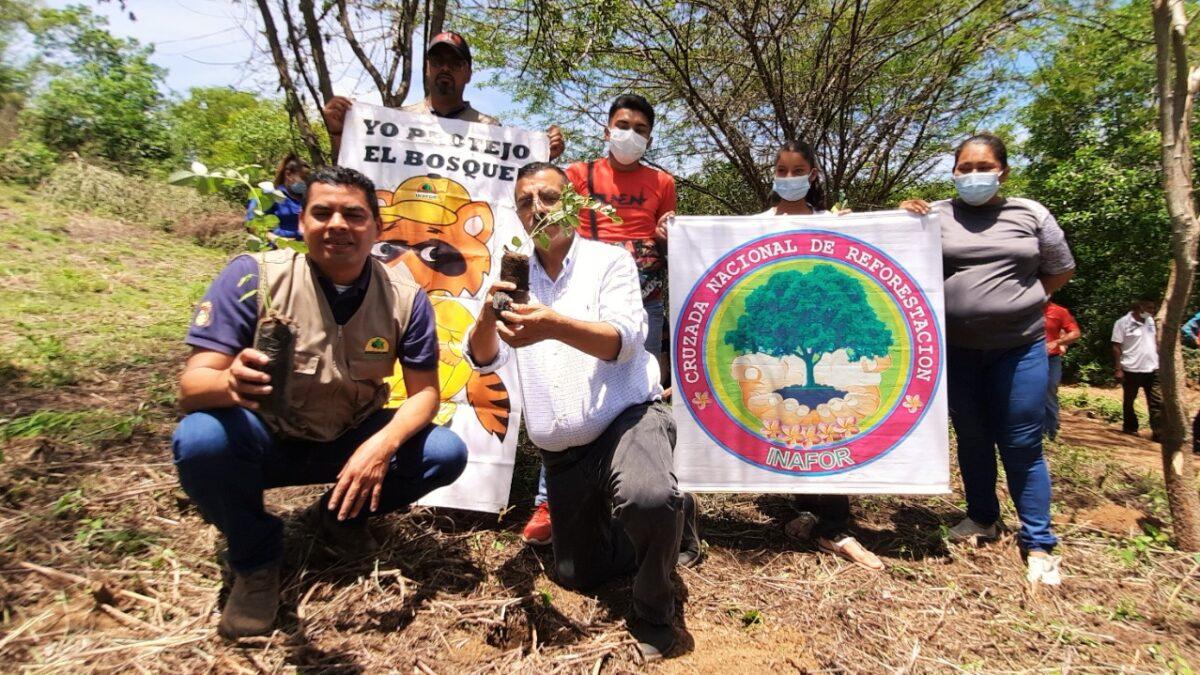 Cruzada de Reforestación en Nueva Segovia sembrará un millón 600 mil plantas