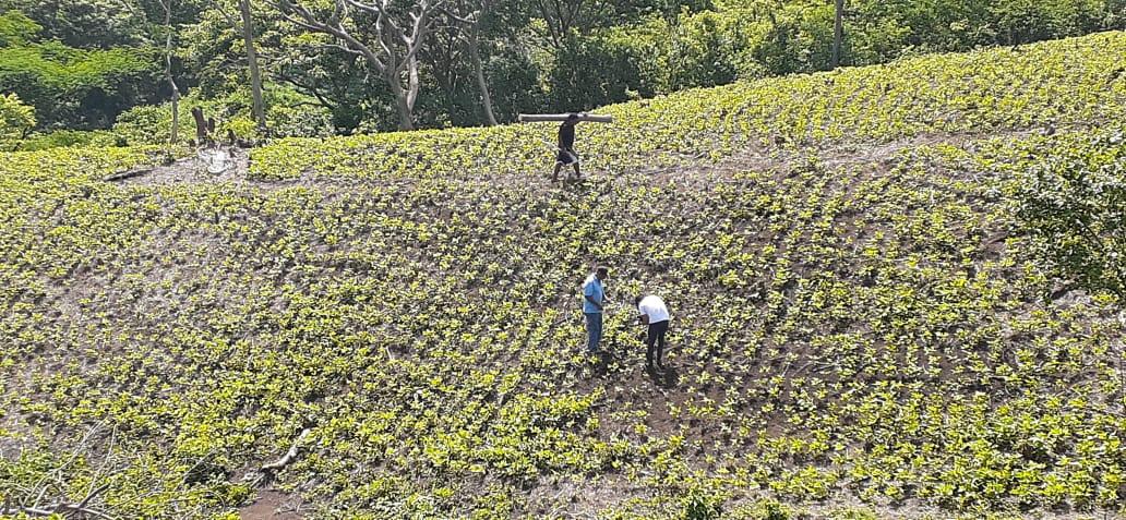 Pequeños productores de Managua muestran optimismo con sus cultivos