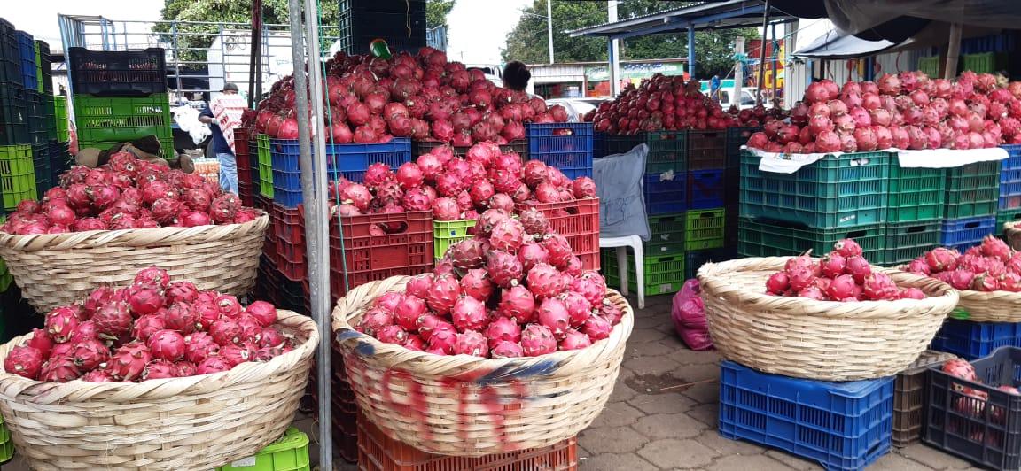 Pitahayas se cotizan a bajo precio en mercado El mayoreo de Managua