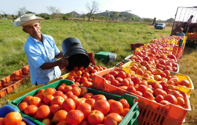 Prevén mayor producción de hortalizas y tubérculos en Nicaragua