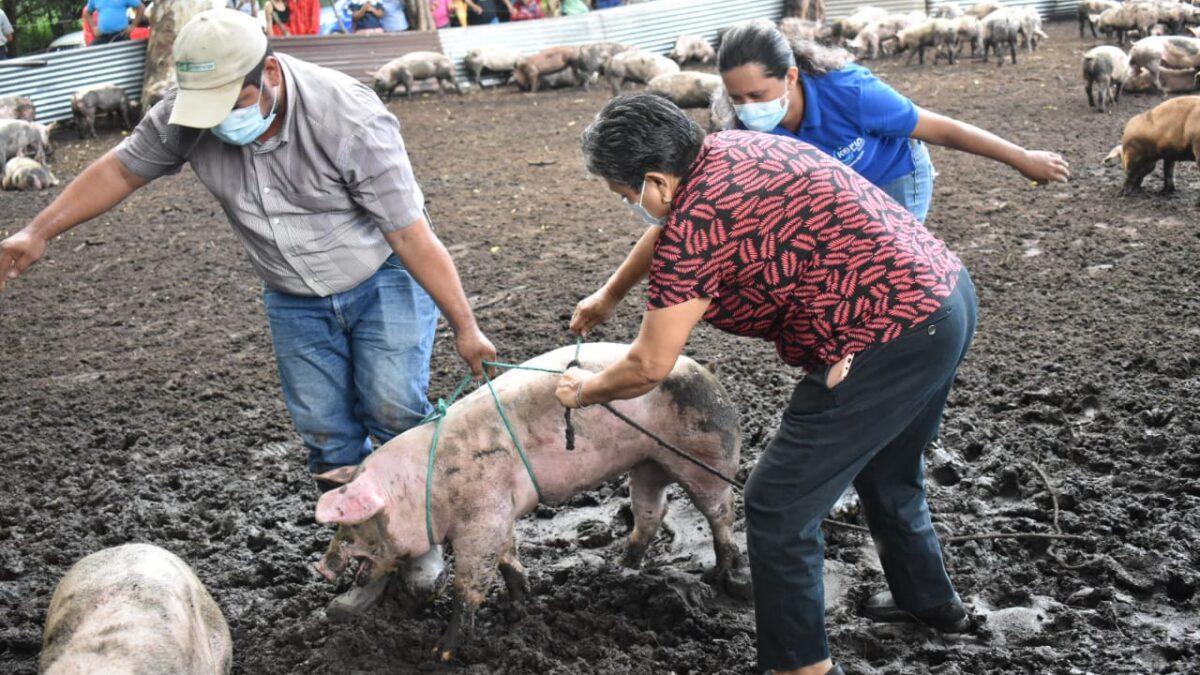 Mujeres de comunidades rurales reciben bono de cerdas en León