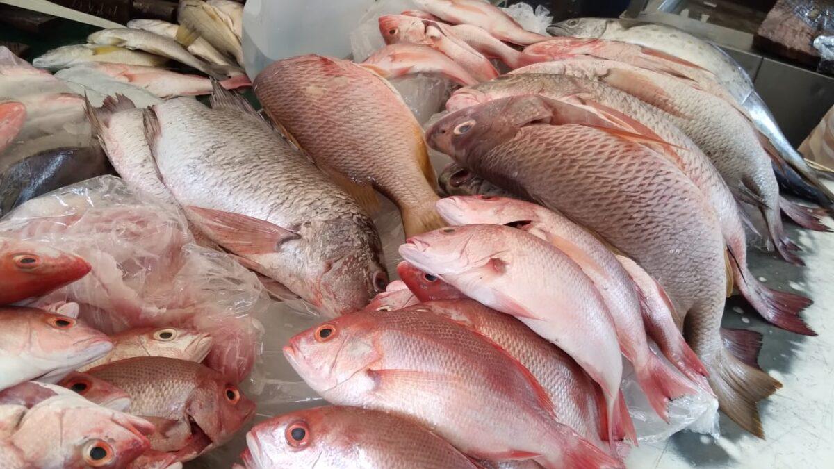 Buenas ventas de productos del mar se registran en el mercado Israel Lewites