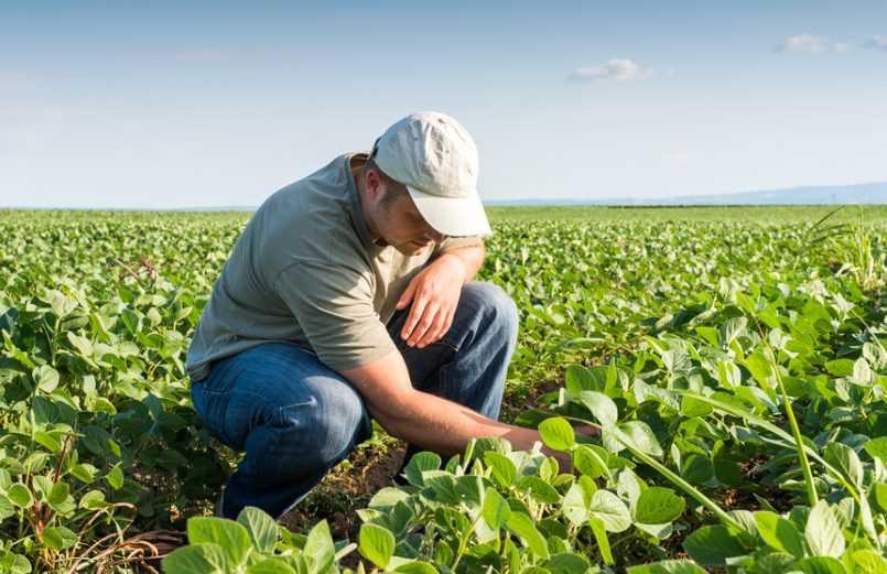 Nicaragua: sector de agroindustria genera más de 240 millones en divisas